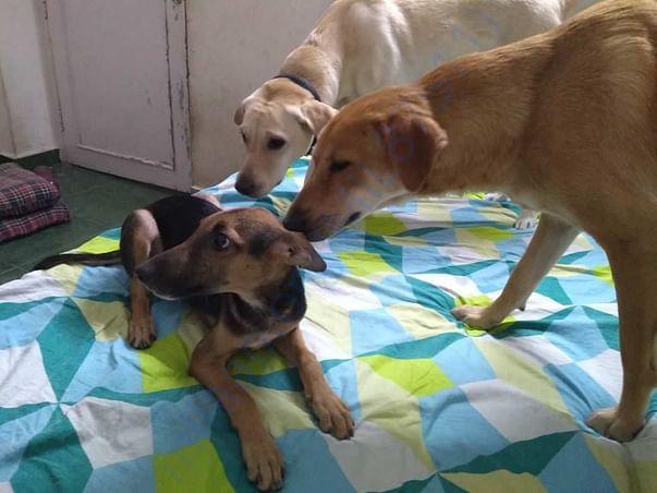 Kishmish at Paws Pet Boarding