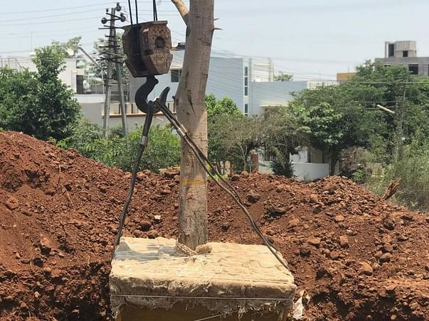Fund Tree Transplant before its Chopped Down for Concrete