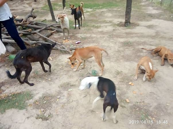 Help Me Feed Stray Dogs