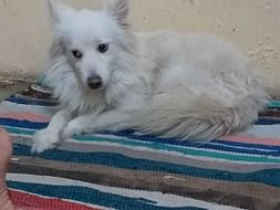 Help Romi Get His Forever Home