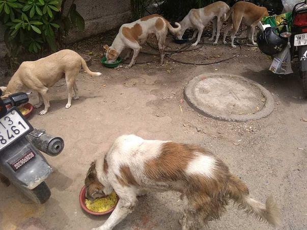 Help Me Feed Street Dogs