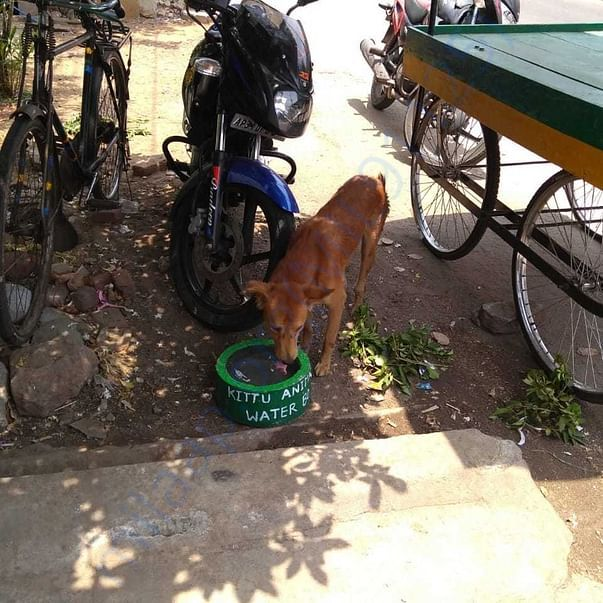 Dog near the Juice shop happy to drink Water