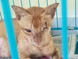 Help Blind Daisy and Her Kittens Survive