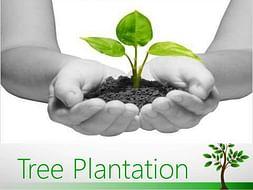 Tree Plantation drive-Your Single Penny Counts