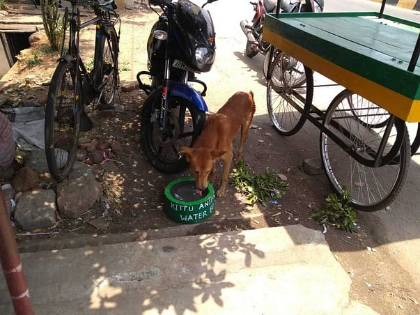 Help us provide India's Stray animals with Water Bowls
