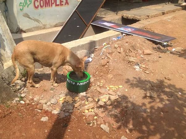Help India's thirsty animals with Water Bowls