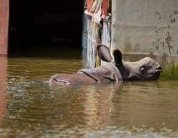 Flood water in kaziranga national park