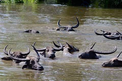 water in kaziranga park