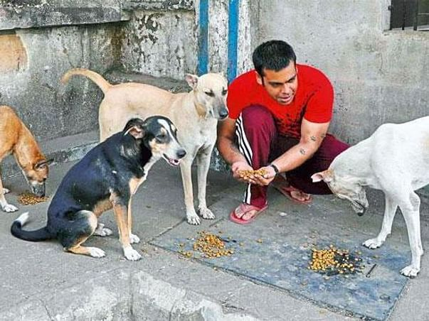 Help Street Dogs and Cows In Varanasi