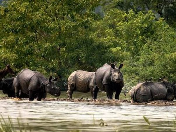 Fundraiser for Pobitora Wildlife Sanctuary & Flood Victims of Assam