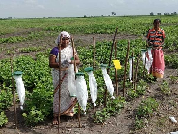 Prevention Is Better..... Empowering Farmers To Resist Pest Attack