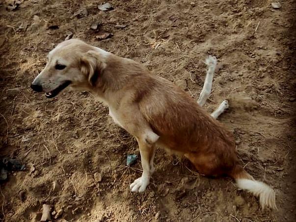 Help us Help other Animals !!!