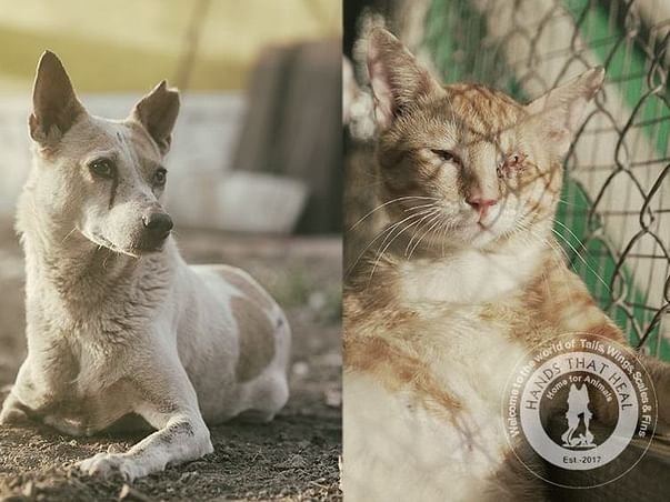 Help 300+ Abandoned And Rescued Animals!