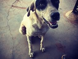 Help stray dogs receive a good nutritious meal .
