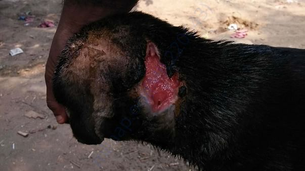 Immediate medical care needed.Need your support to raise funds