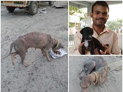 Maheshwaran seeks your help to save a poor homeless dog.