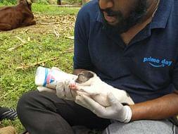 Help Animals And Livestock In Flood-Affected Areas Of Uttara Karnataka