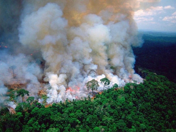 Help the amazon rainforest fire