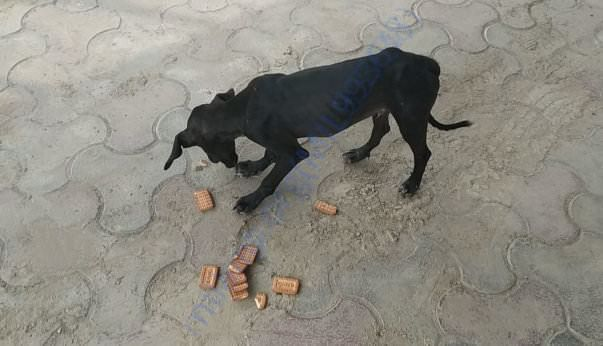 Lucky at the time of rescue.