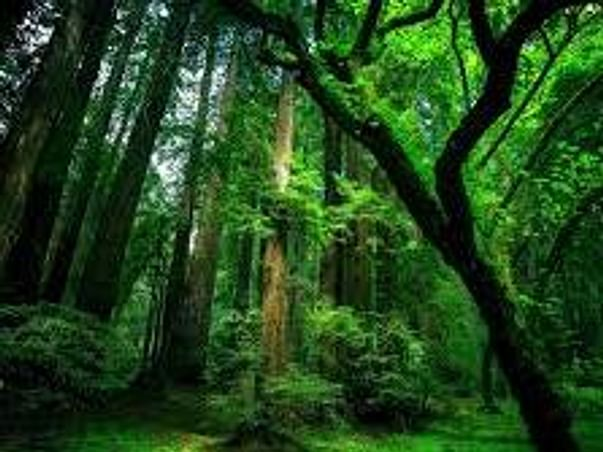 Save World Plant Trees