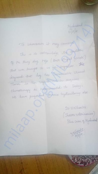 Letter from the Vet establishing the condition of the dog