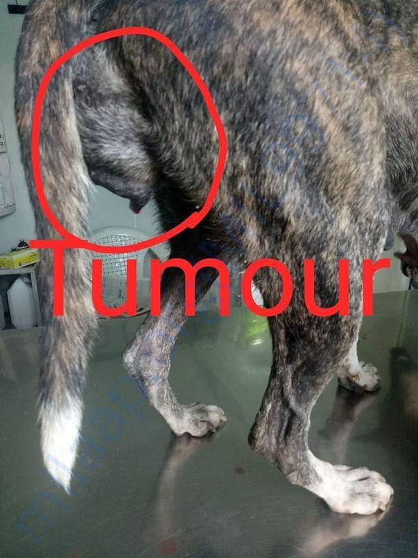 Picture of Tumour