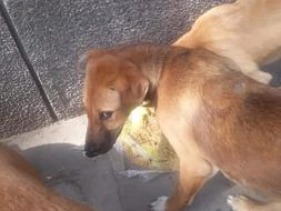Help me in feeding animls and stray dogs of delhi