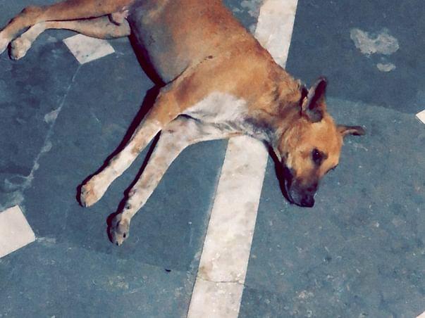 Help me sterilise my 15 stray dogs!!