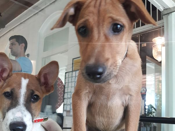 """Help """"Water"""" & """"Coco"""" fly to their forever homes"""