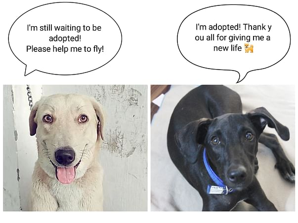 Help Ronnie & Lucky To Fly!