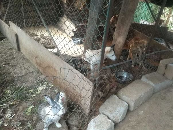 Support Build A New Shelter For 111 Plus Animals