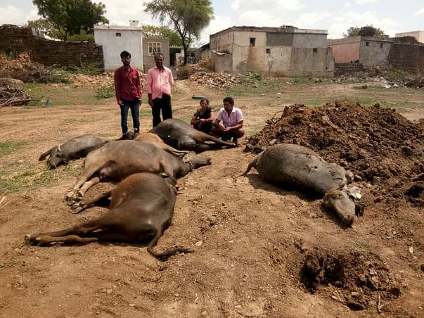 Help Farmer Suri To Recover His Livelihood