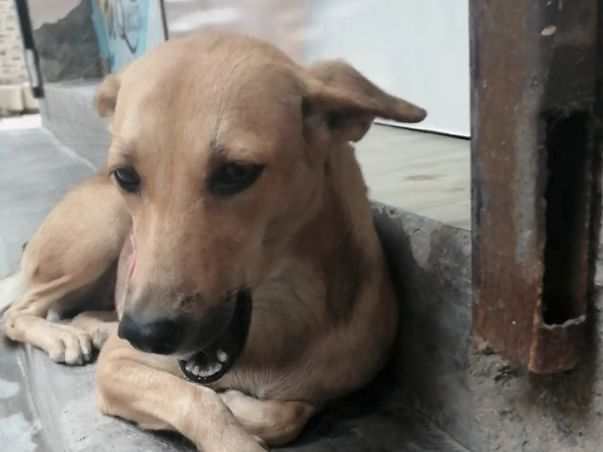 Family for 100+ abandoned and helpless stray animals