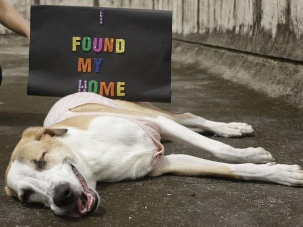 Help Bonnie reach her forever home in the US!