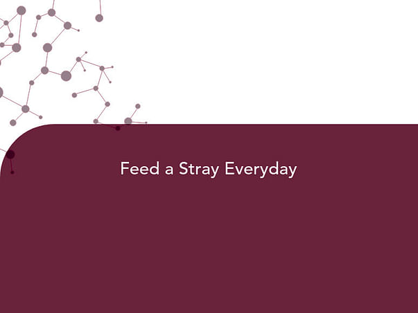 Feed a Stray Everyday