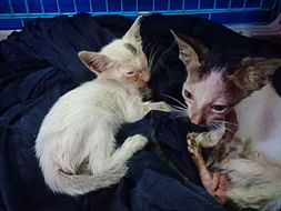 Help Me Save These Kittens Lives