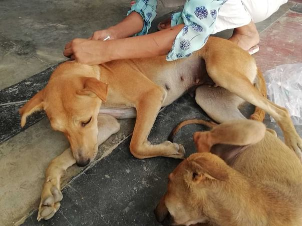 Need funds for the stray animals in Allahabad for their food treatment