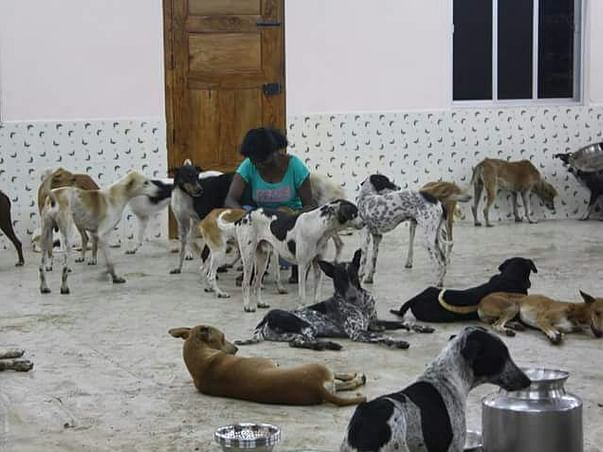 Help Sunitha Save and Feed Her Rescued Animals