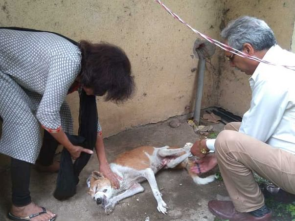 Help Neelam establish 108 services for stray animals in Bhopal