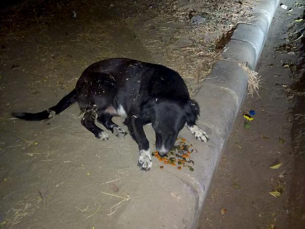 Help Stray Dogs of Dwarka New Delhi