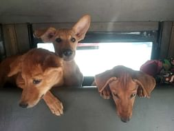 Help The Adorable Furry Residents Of IIT Madras Live Safe Happy Lives!