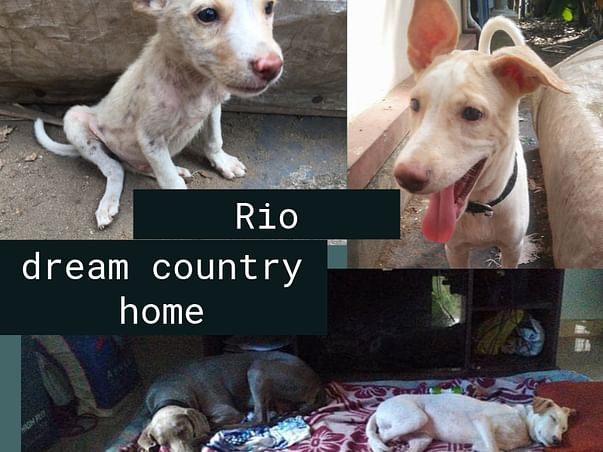 Help Cherai tails save, vaccinate and sterilize pups this Monsoon