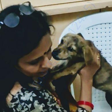 Rescued street puppy, lost leg sensation
