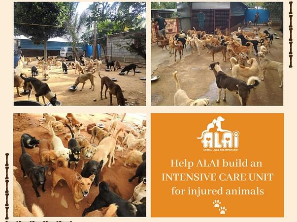 Help ALAI Build An Intensive Care Unit For The Injured Animals