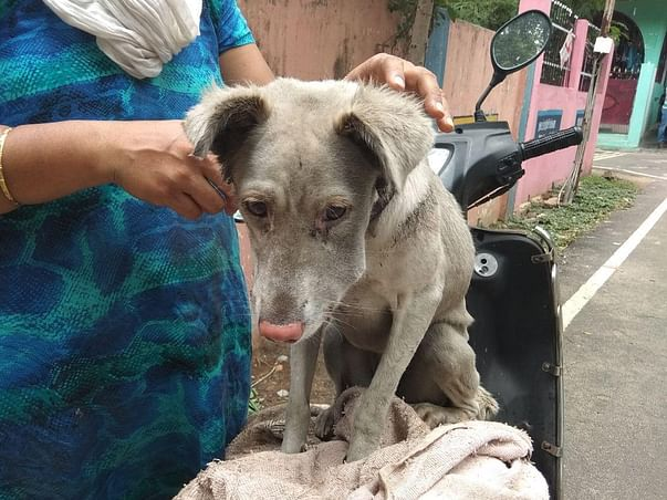 Help Us To Pay Our Vet Bills
