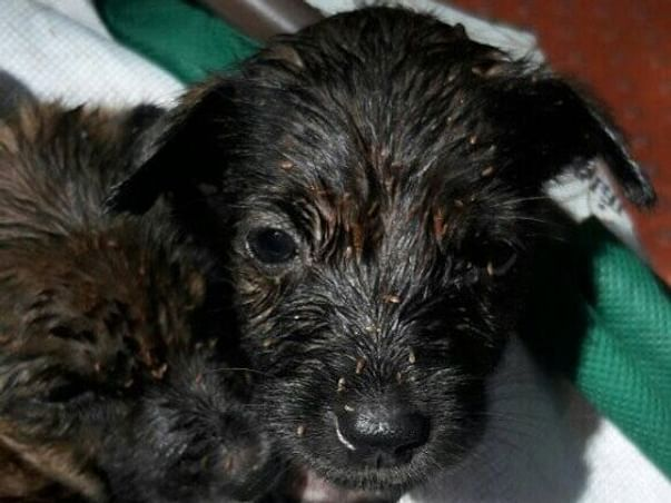 Help 5 puppies who're in desperate need of medical help.