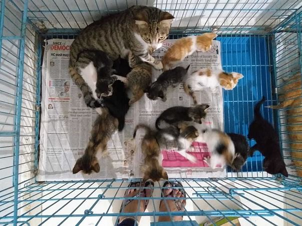 Help Hope's Home to Raise Healthy Kittens