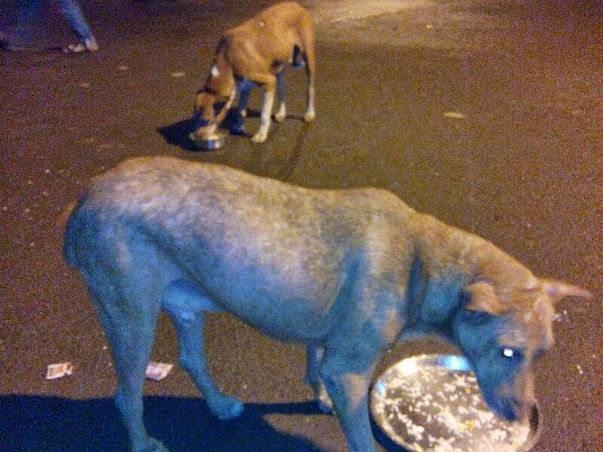 Feeding Program and Well being of Vikhroli street dogs