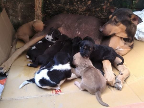 Help In spay and neuter drive for stray dogs(based on kolkata)