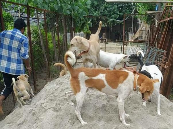 Help for 200+ Old & Paralyzed Animals